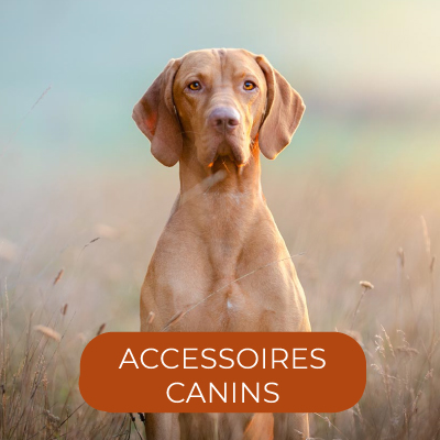 Accessoires canins